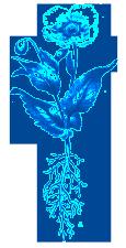 blueye1